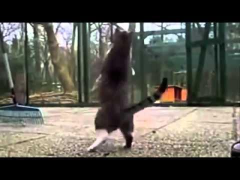猫 おもしろ1 –  funny crazy cats