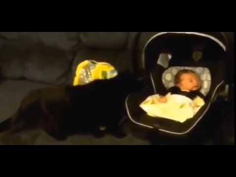 「赤ちゃん犬猫」おもしろ可愛い赤ちゃんと