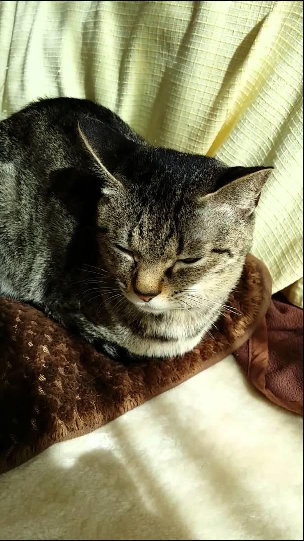 猫の可愛い仕草