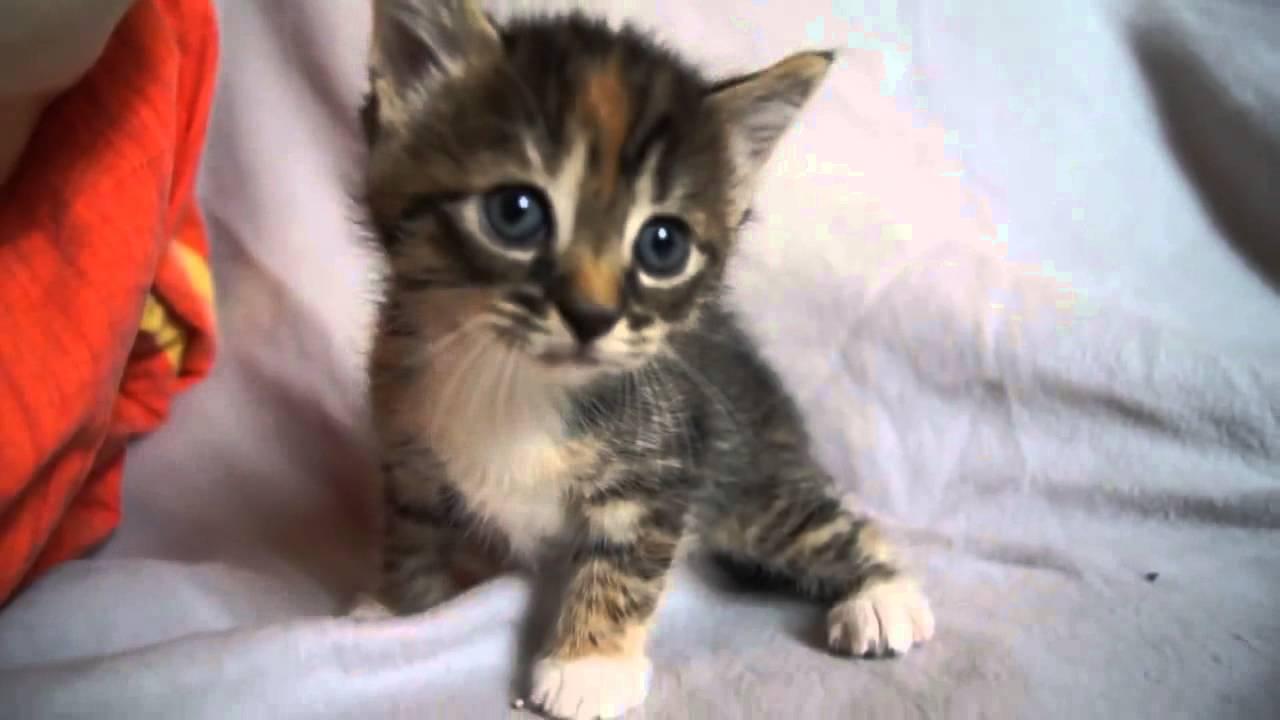かわいい赤ちゃん子猫ママ猫がないため