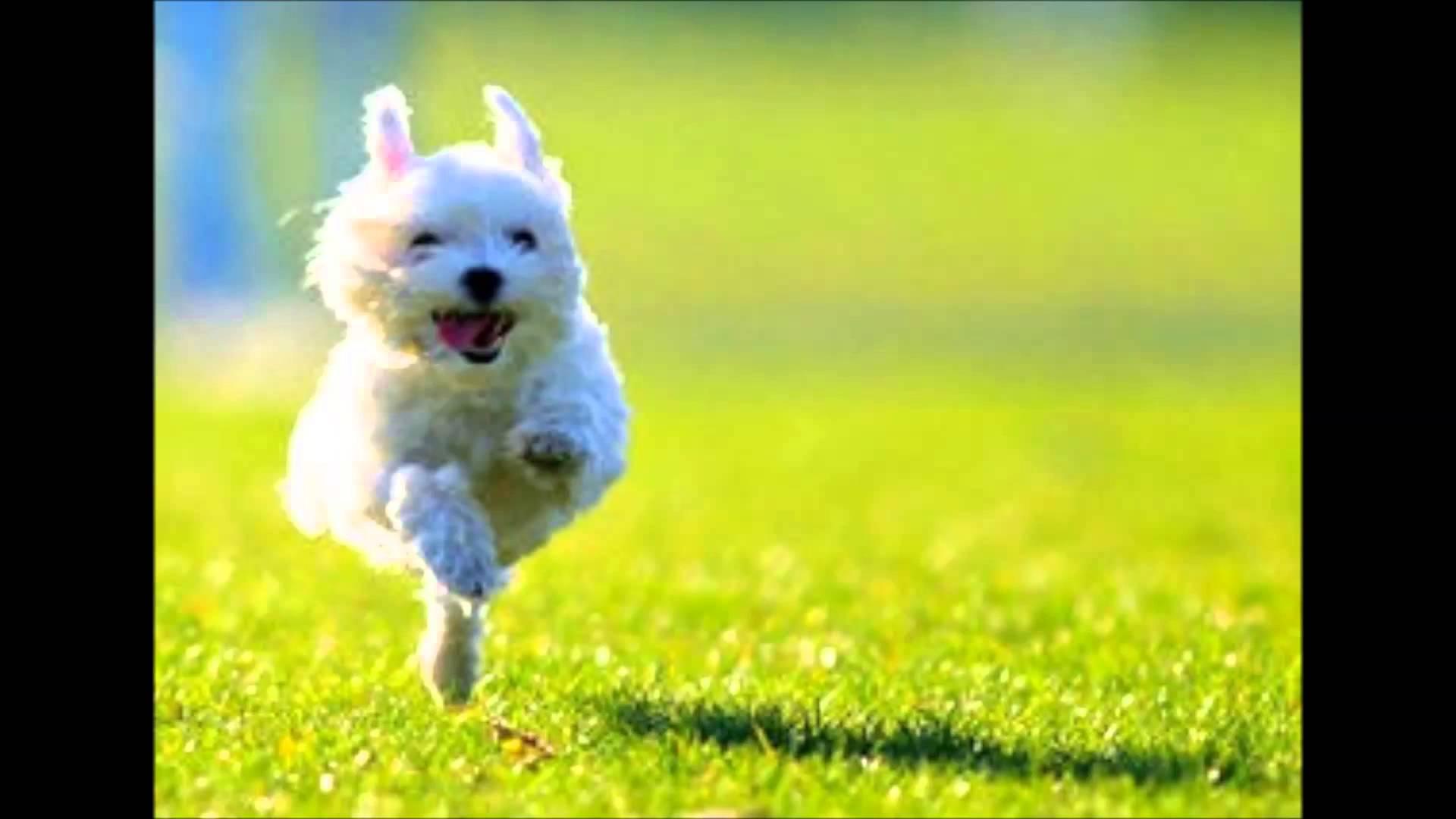 空飛ぶ犬の飛行犬画像 可愛すぎる…!空とぶ犬『飛行犬』が大人気