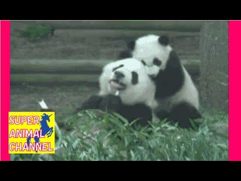 【癒されたら負け】可愛いけど腹筋崩壊!おもしろ過ぎる動物ハプニング動画