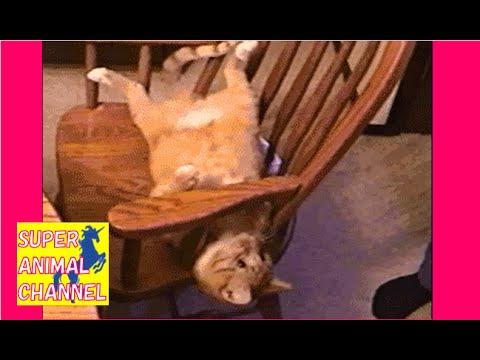 【癒されたら負け】可愛い!おもしろ過ぎる動物ハプニング動画