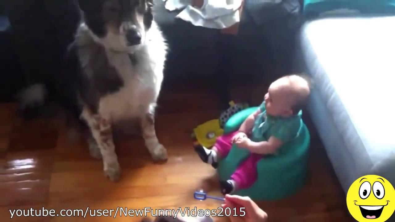 おもしろビデオ   犬笑う赤ちゃん   かわいい犬