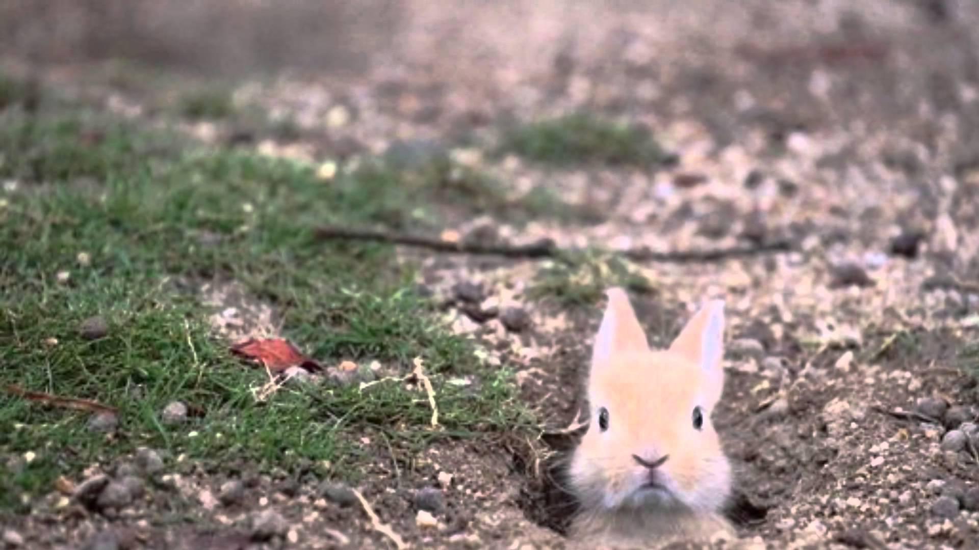 かわいい♪ ウサギの赤ちゃん