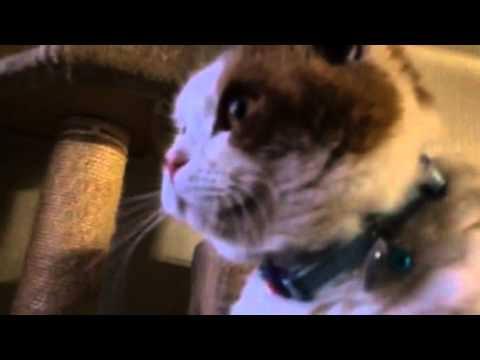 【おもしろ猫動画】お外が見たいモモちゃん