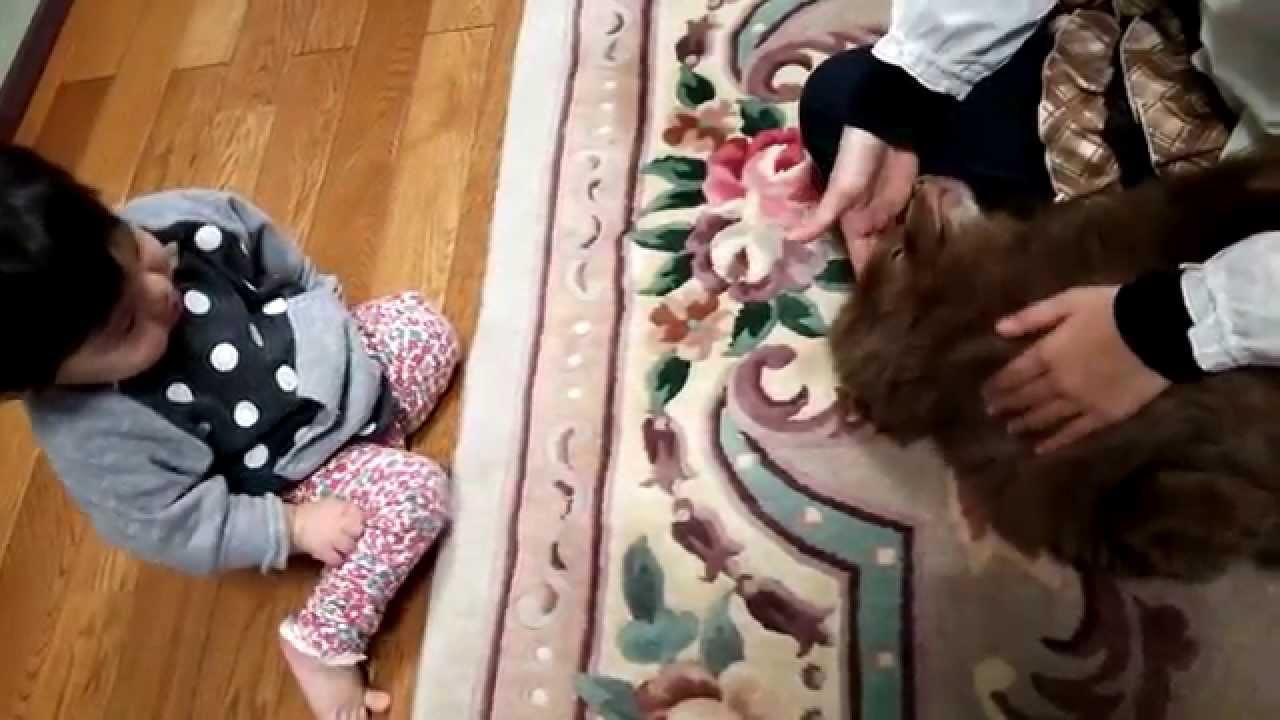 かわいい姉妹と犬~姉ちゃんに甘える愛犬を見ている赤ちゃん(笑) Cute sister and dog