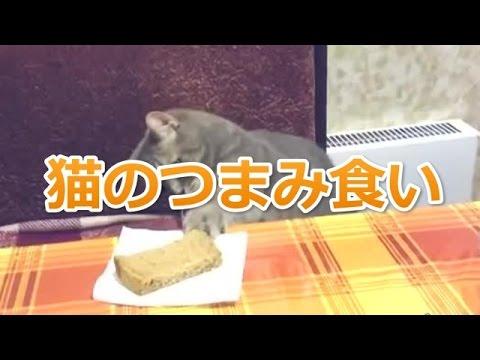 【かわいい猫動画】人の食べ物にちょっかい出す猫たち!