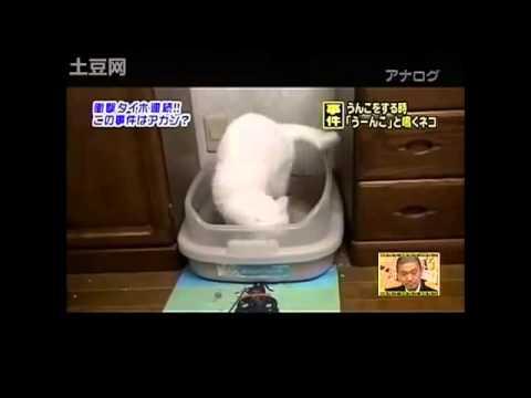 うんこをするとき「うーんこ」と鳴くネコ事件