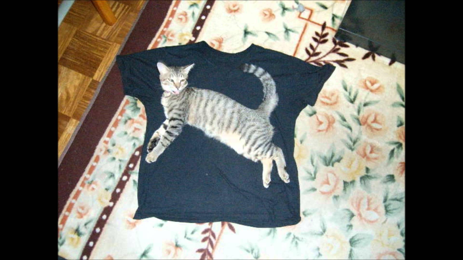 その位置ください!プーマのロゴになりたいネコたち