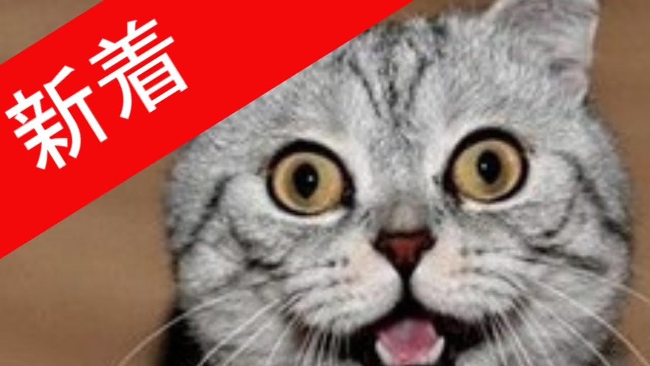 おもしろ 猫 ハプニング Part1 【コメ付き】猫のアホな瞬間ビックリした瞬間まとめました