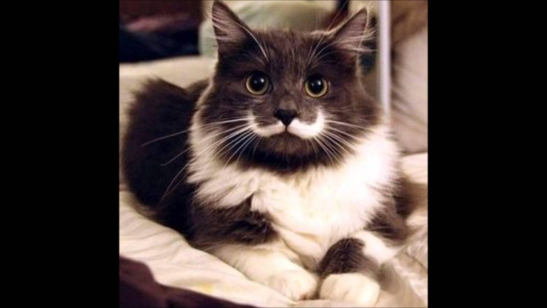 ちょっとお洒落なデザイン『猫画像特集』part3