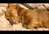 白目をむいて爆睡する姿がかわいいミックス犬